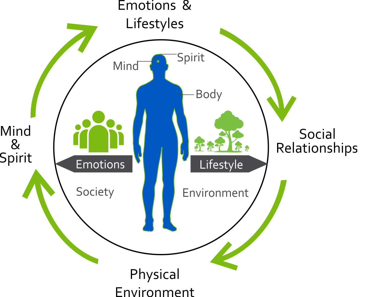 life-cycle image
